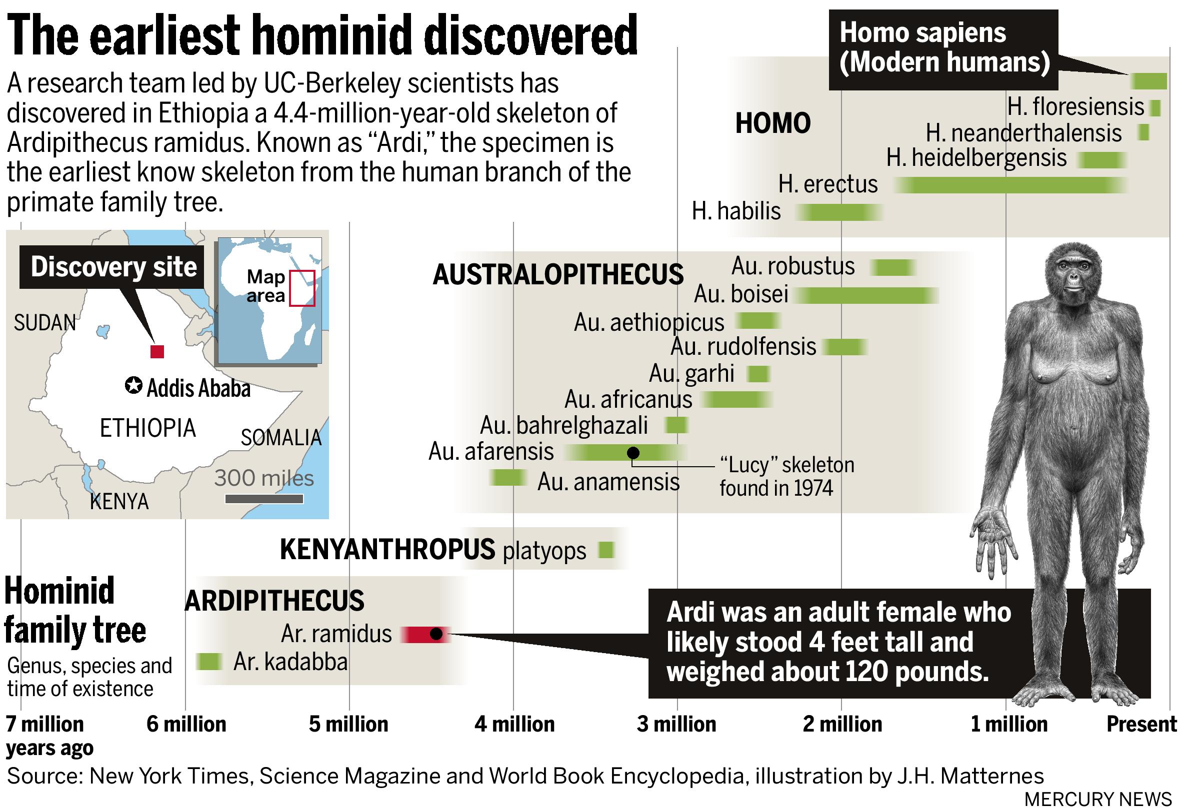 an analysis of the archaeological discovery of australopithecus afarensis lucy Reconstruction of lucy (australopithecus afarensis) read articles about the latest theories and archaeological discoveries about human origins an analysis of hominid skull from dmanisi suggests the earliest homo - homo habilis.